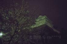 姫路城夜间的樱花