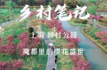 顾村公园:魔都春天的粉色摩天轮