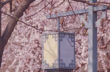 桃花朵朵开 北京市内必去的拍照打卡地