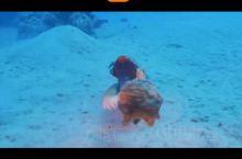 石头鱼章鱼哥