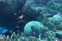 好看的水族馆