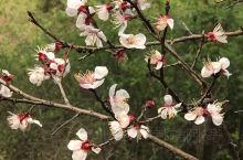 春冬各有风韵!