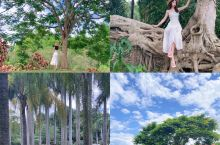 中科院植物园闯入爱丽丝梦游仙境的一天