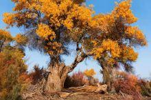 国庆新疆的秋走进童话世界北疆8日之旅