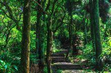 华顶国家森林公园位于浙江省天台县石梁镇,主峰华顶山海拔1098米,山中风光堪称一绝,云海、日出、杜鹃