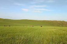 渐渐变黄的大草原