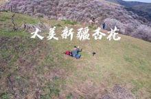 诗和远方尽在于此 去新疆追求一场杏福