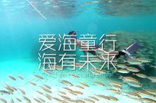 海里zui帅的崽#潜水##海洋##亲子#