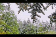 买一送一,在春天里送你冬天风景。
