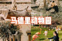 马德里动物园趣味多 看国宝熊猫喂火烈鸟