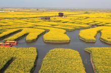 江苏兴化油菜花有多美?坐船游览如进入迷宫
