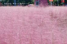 苏州周边丨鹅湖玫瑰园粉黛红, 秋日限定粉
