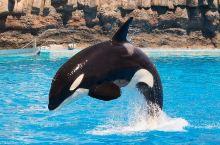如果想享受名古屋港水族馆120%乐趣推荐