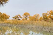 罗布人村寨自然景观好美