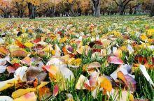 在一个合适的时间 去了一个五彩斑斓的地方 留下了很多回忆 黄土高原之上 黄河岸之北 深秋季节 流连往