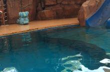 恐龙园海狮表演