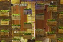 吊盆绿植物