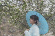 一场春雨,一缕清风,一簇花开。[Sakura]