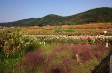 10月去拈花湾,还有很多花啊…