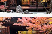 京都红叶季之建仁寺、北野天满宫与光明寺