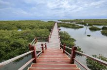 北海金海湾红树林——壮观的海上森林