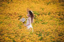 盛夏童话体 来京郊拥有一片鲜花的海洋