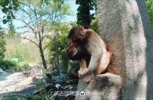 五莲山逗猴哥等 属于周末的小确幸