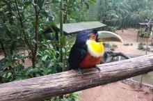 伊瓜苏鸟园