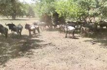 骑马看非洲野生动物
