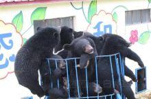 牡丹江黑宝熊乐园,位于牡丹江三道关国家森林公园内,这里山清水秀,树木茂盛,是我国最大的黑熊养殖繁育基