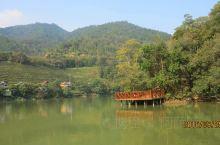 九鹏溪水岸茶园