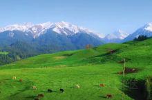 你来过新疆伊犁吗?真的很美!