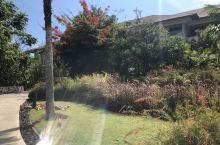 巴厘岛的绿化