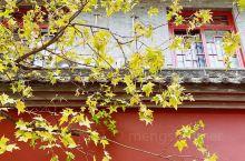 唐大慈恩寺|长安深秋的银杏满园