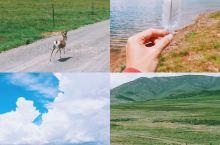 青海旅行 偶遇藏羚羊、小野马…冬给措纳湖