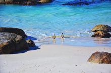 南非企鹅岛