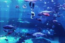 日常自由潜水员潜入南昌海洋馆解锁新玩法