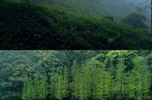 【广州周边】周末好去处—石门国家森林公园