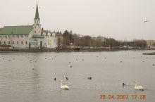 托宁湖坐落于雷克雅未克市中心,赋予了这座城市永恒的从容与平静。天鹅、燕鸥、灰雁、鸭子等水禽无论冬夏栖
