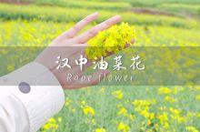 汉中|我见过最美的春天便是你穿过油菜花海