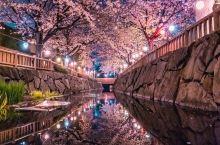 日本香川县的樱花