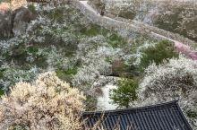 韩国旅游花潭林