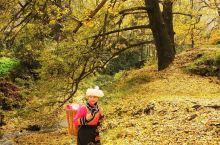 走进最低调的世界古银杏之乡