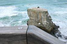 新西兰鸟岛信天翁的生行繁衍的天堂。太美了