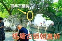 上海练塘古镇里,有一座古桥,上面长了一棵这样的怪树,有点奇怪