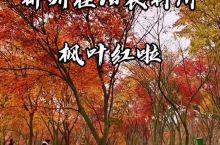 桂阳枫叶林.郴州枫叶林.枫叶林景点郴州