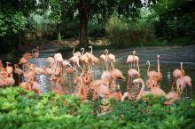 广东肇庆适合亲子游的湿地公园