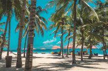 旅行日记丨薄荷岛溜娃度假村-南方棕榈