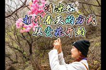 清凉谷打开春天的方式从赏花开始
