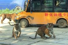 旅顺口旅游景区之狮虎园